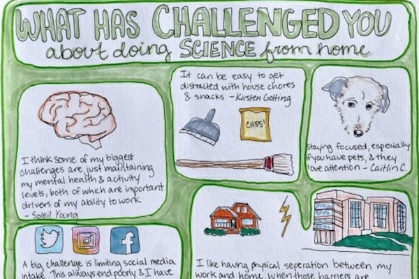 Illustrated answers from UW researchers about working from home